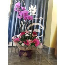Orkide aranjman