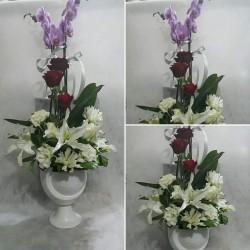 Orkideli tanzim