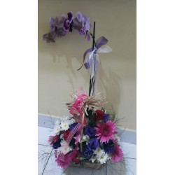 Aranjman Orkide