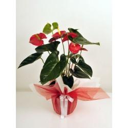 Beyaz Orkide & Kırmızı Gül